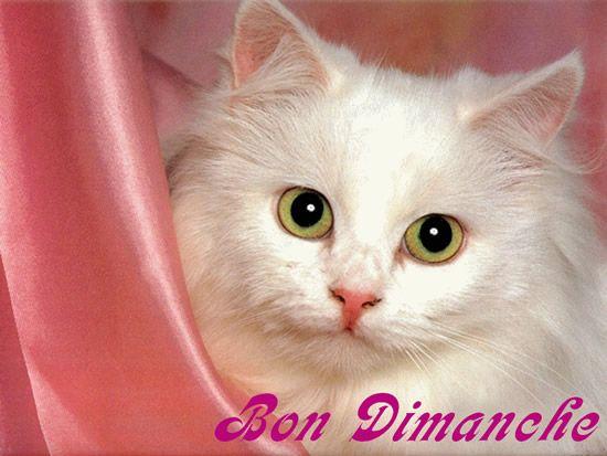 Bon Dimanche: