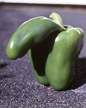 Community Post: 36 Sexiest Fruits On The Planet