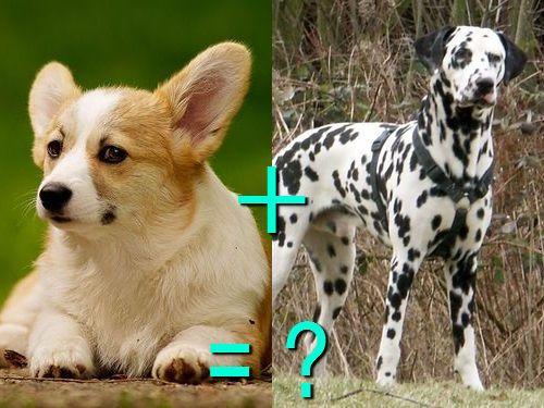 犬の混血a 00 Animals Dogs Corgi