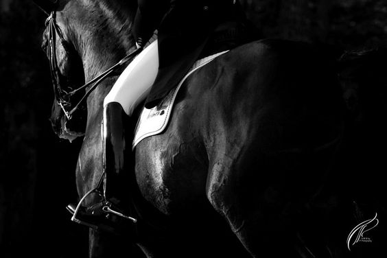 www.pegasebuzz.com | Equestrian photography : Louise TP Photography.