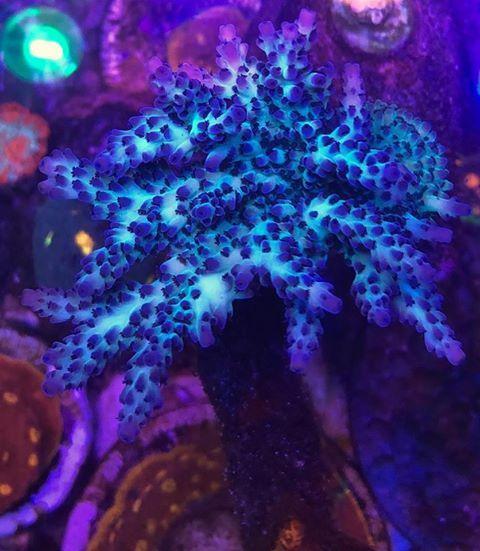 Best Led Lights For Reef Tank 2018 2019 Review Reef Tank Saltwater Tank Reef Aquarium