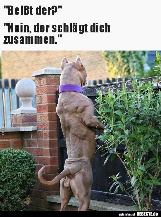 sternzeichen löwe flirten)