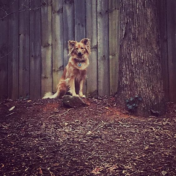 Queen of the mountain #dogsofinstagram #vdog #dogs #instadog #vegansofig #rt4 #compassion #love