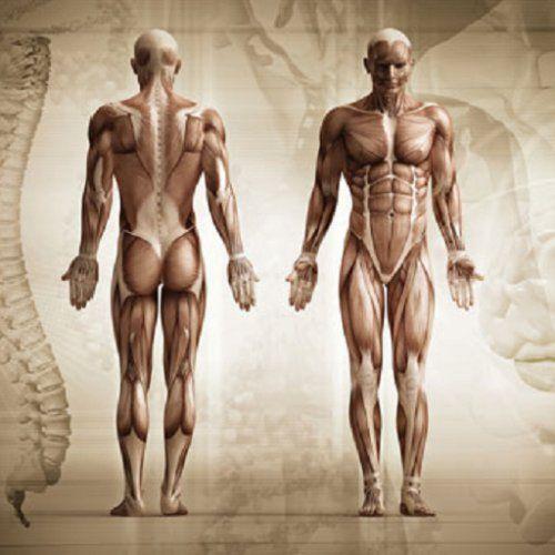 Human Anatomy Complete Atlas, http://www.amazon.co.uk/dp/B00WNJRJ3M/ref=cm_sw_r_pi_awdl_-6s6wb1H9E0GY