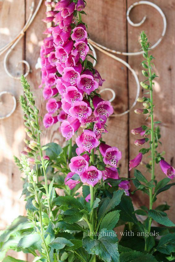 bulbos tesoros jardinera naturaleza jardines de flores la naturaleza hermosas flores jardines jardines de color rosa bonitos jardines flores de
