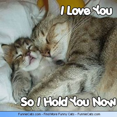 Image detail for -funny cat cats kitty kitties kitten kittens funnie love cuddling ...