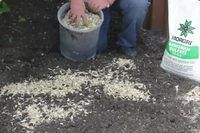 How to Grow Potatoes in a Barrel of Sawdust | eHow