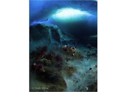 "Underwater ""icefall"""