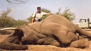 Please Sign Our Petition to Stop Trophy Hunting in Zimbabwe.