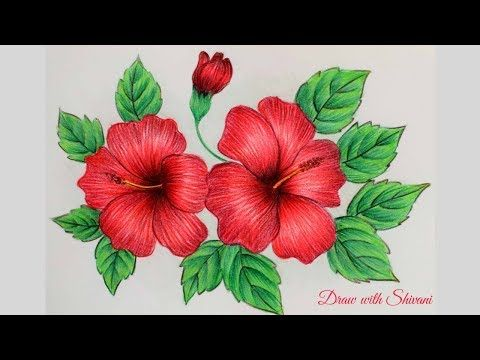 Hibiscus Sketching Using Pencil Colors How To Draw Hibiscus