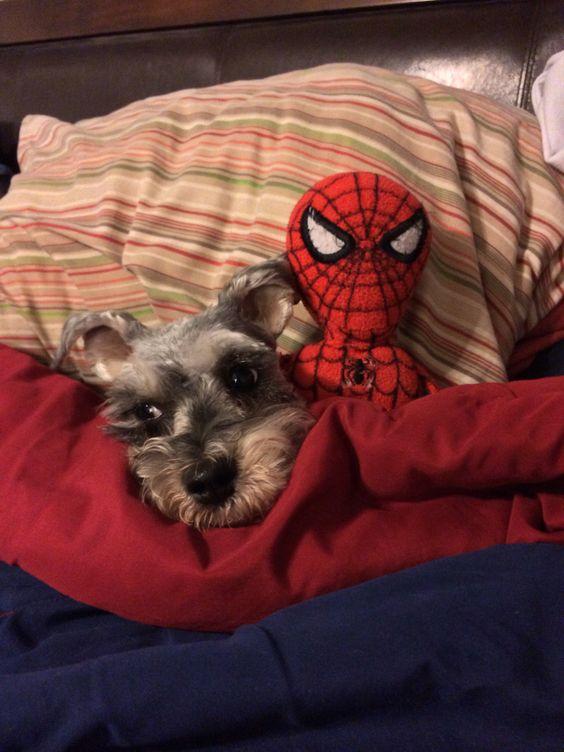 Ripley & Spider-man