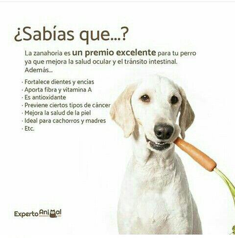Pin By Yadira Leonor On Memes Perros Labrador Retriever Dogs