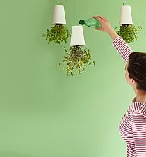 That's different, not a bad idea, upside down plants...