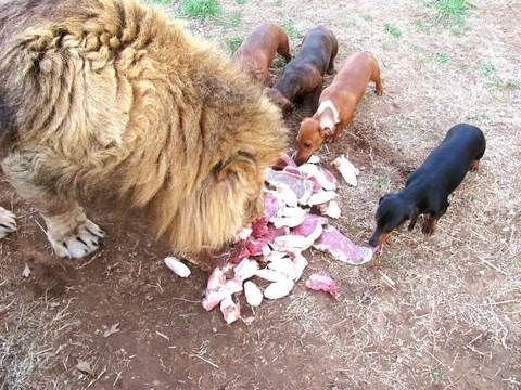 Pin On Animals Love Love