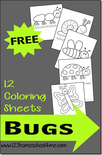 FREE! 12 Bug Coloring Sheets! Perfect for toddlers, preschoolers, and Kindergartners for Spring, Summer, or Fall.