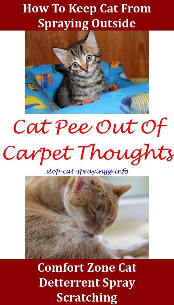 Cat Calming Spray Cat Pee Smell Cat Pee Smell Removal Cat Urine