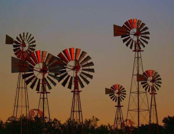 Windmill farm in Lubbock, Texas.: