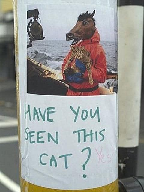 10 Hilarious Posters For Missing Cats Cat Posters Lost Cat