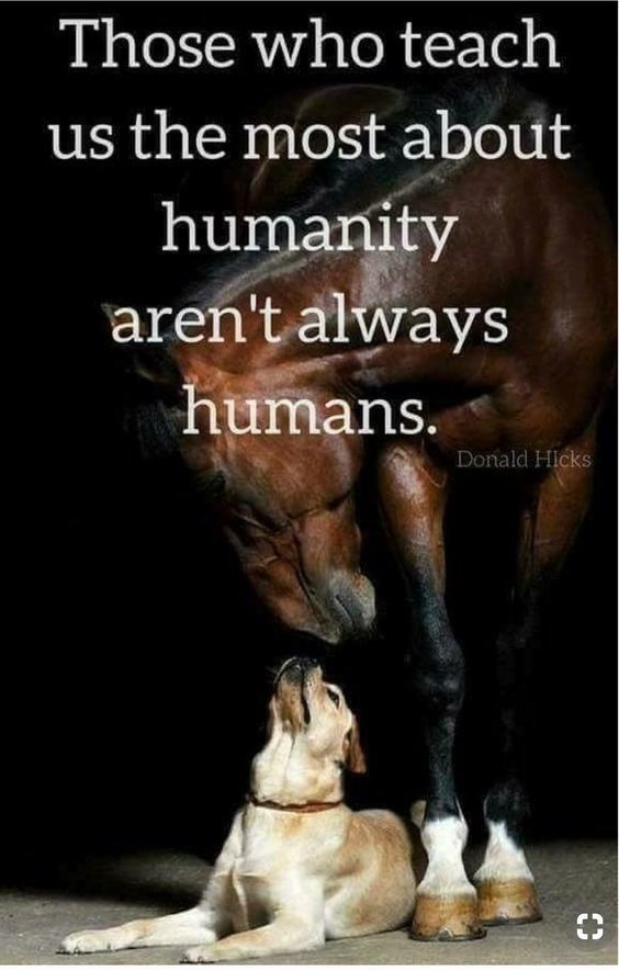 Cheezburger Image 9113919488 Inspirational Horse Quotes Horse Quotes Equestrian Quotes