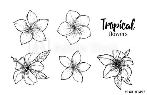 Hand Drawn Vector Illustration Tropical Flowers Summer Time