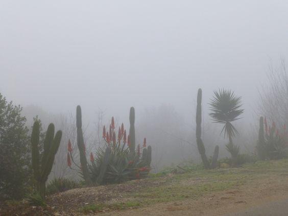 Alonim in mist