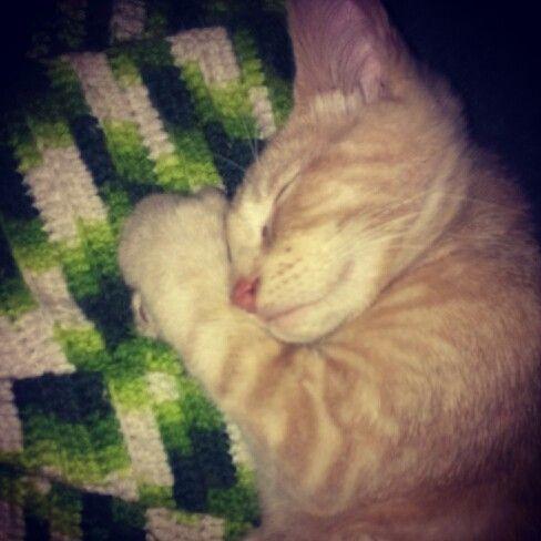 Baby kitty cuddling