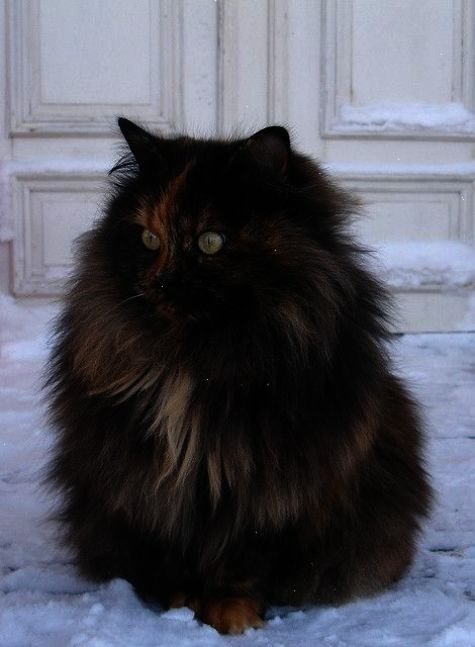 Awesome Beautiful Cute Cats Pics Great Beautiful Cats Beautiful Cats Pictures Animals Beautiful