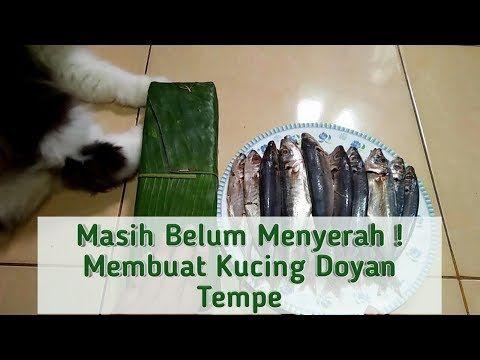 Tempe Untuk Kucing Membuat Makanan Kucing Sendiri Wet Food Youtube Makanan Kucing Kucing
