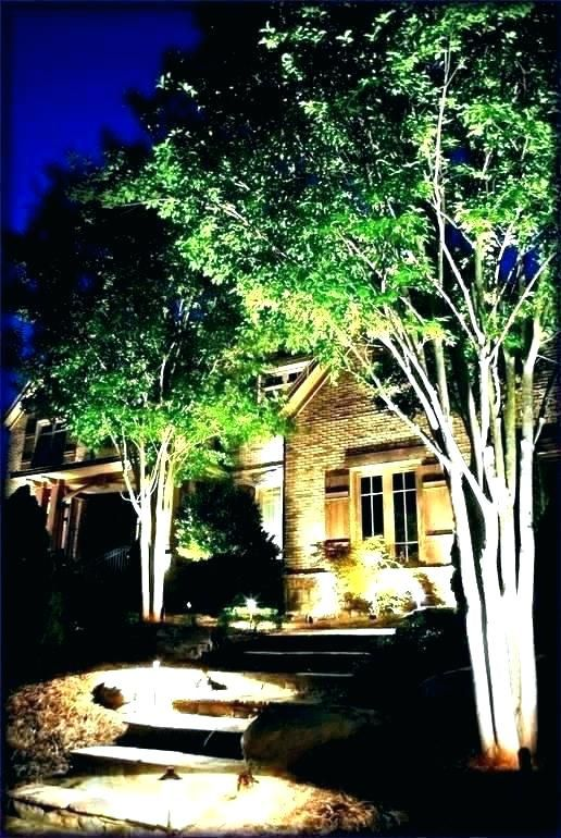 Yard Landscape With Outdoor Lights