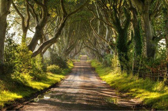 1_amazing-trees-18.jpg
