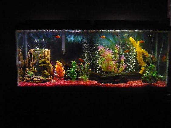 Dark backgrounds fish tanks and fish on pinterest for Aquarium log decoration
