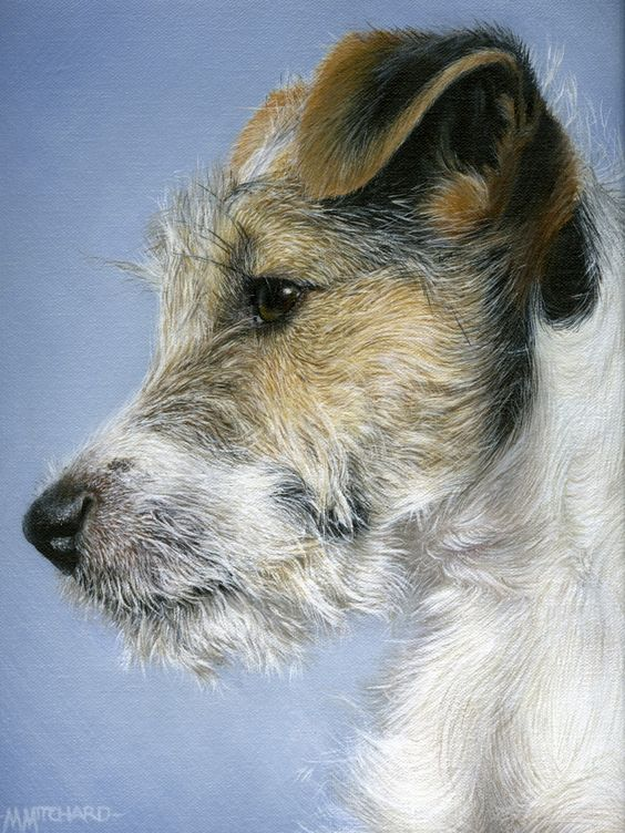 Marc Mitchard Jack Russell Picture - this looks like the spitting image of my Jack Russell!