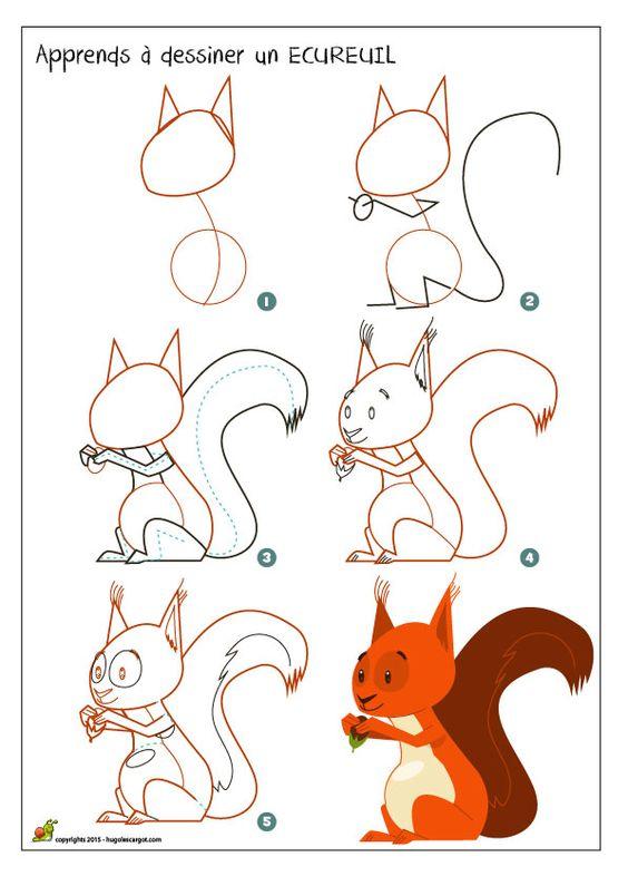 Méthode pour dessiner un écureuil, apprendre à dessiner un écureuil roux