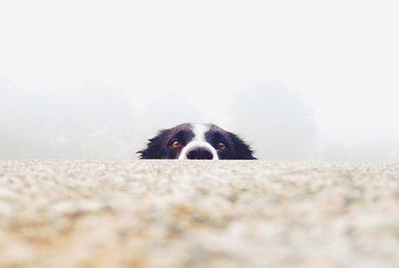てへへ。ぼくのこと、見つけられるかな?| roomie