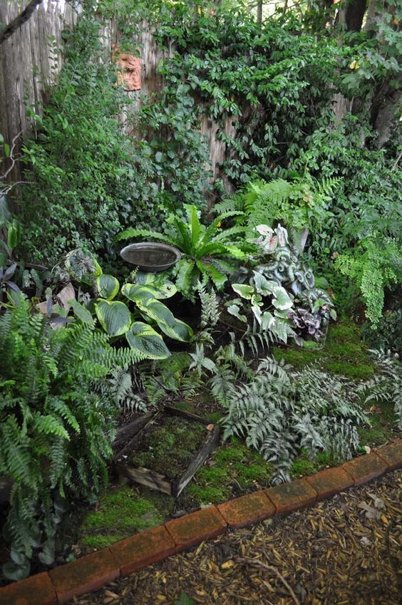 A small shady space became a hidden garden filled with hardy and tropical ferns hosta moss and - Trees for shade in small spaces concept ...