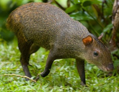 World's Largest Rodent Shows Up in California, Spurs Viral ...