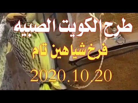 طرح الكويت الصبيه فرخ شاهين تام 2020 10 20 طرح اليوم Youtube Neon Signs Falcon Hunting Neon