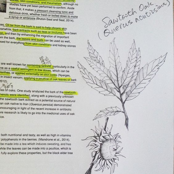 "We love seeing plant notes from our students  STUDENT SHARE: ""a quick sketch on my herbalism study notes~sawtooth oat."" - sisahandmade #myherbalstudies"