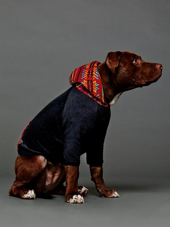 Big Dog Wearing Sweater Pinterest • T...