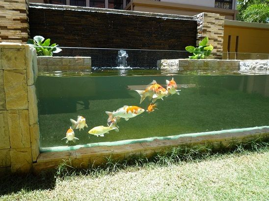 Pond glass google zoeken water pinterest gardens for Pop up aquarium
