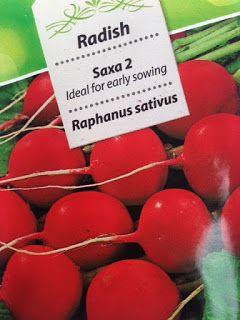 VIDA FELIZ: na Horta: Como Semear, Plantar, Colher RABANETES II