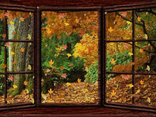 ventana+y+hojas+gif.gif (506×380)