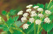 Herbal bath salt recipes, herbal cold & flu recipes, herbal drink recipes, & herbal pesto recipes