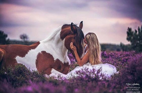 Breathtaking horse lying down with girl in field of purple flowers.