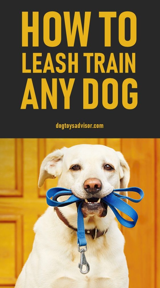 Does Your Dog Pull On The Leash Here S How You Can Train Your Dog