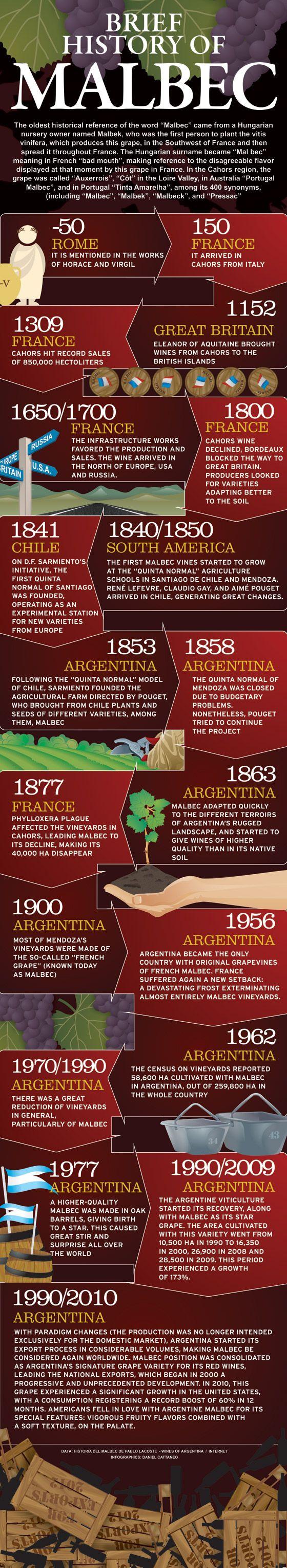 Historia Concisa de la uva Malbec   WineSur - October 9, 2013 #vino #wine