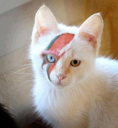 Bowie kitty iz sad todays.