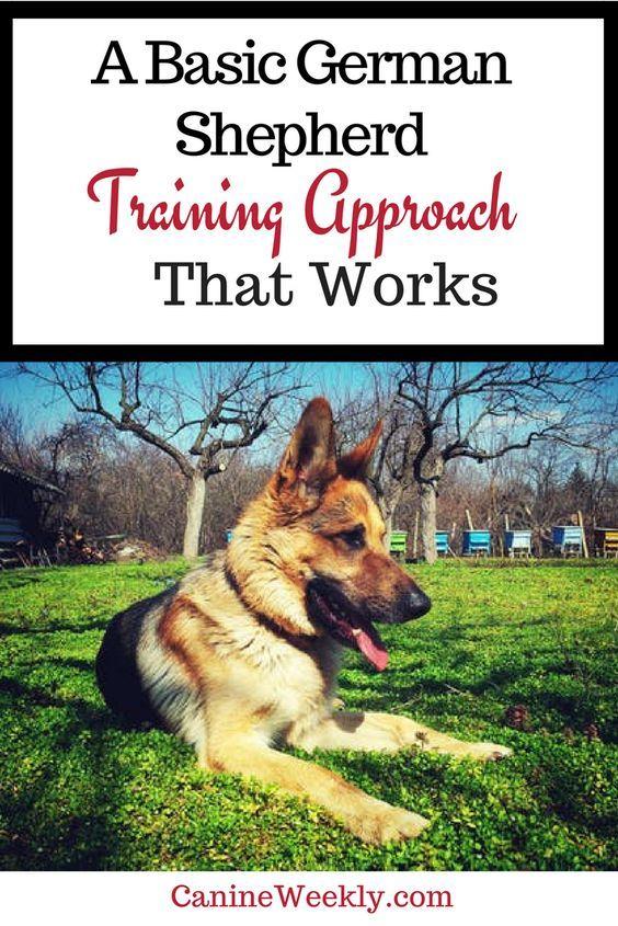 7 Basic German Shepherd Training Tips Basic And Helpful Hints