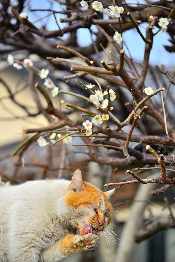 Come spring!