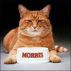 Morris.